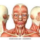 Female Face Muscles Images, Stock Photos & Vectors