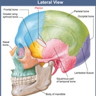 pterion -- location of middle meningeal artery (branch of maxillary artery)
