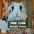 Pine Cone Rabbit Treats Keep Bunnies Active