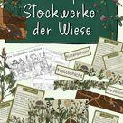 Stockwerke der Wiese Materialpaket - Miniheft, Tafelmaterial, Texte & Poster