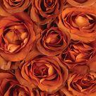Coffee Break Roses - Calyx Flowers, Inc
