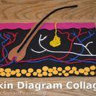 Skin Diagram Collage
