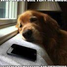 Funny Dog Texts