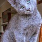 Katzen erziehen: Worauf kommt es an bei der Katzenerziehung?