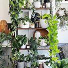 Entdecke die Magie vonGrünpflanzen – Dekoideen