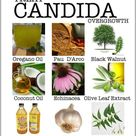 Candida Fungus