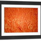 Large Framed Photo. Microscopic view of intestinal villi inside