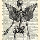 Skeleton Wings Skull Art Print, Skeleton Poster, Anatomy Goth Art Bedroom Wall Decor, Gothic Art,  Skull Poster Print, Antique Book Page 195