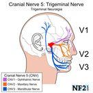 CN5 - Trigeminal Nerve