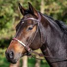 Bitless bridle - Dy'on