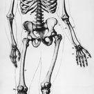 Box Canvas Print. Human Skeleton