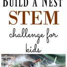 Build a Nest STEM Challenge for Kids