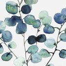 Loose painting - Eucalyptus Silver dollars - Leaubleue aquarelle