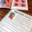 Human Heart Anatomy Printable Activity & Vocabulary