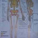 Medical terminology. Anatomy