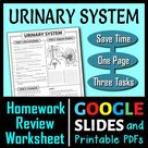 Urinary System Review Worksheet / Test Prep (Google Slide, PDF & PowerPoint)