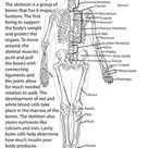 Awesome Anatomy: Follow Your Heart | Worksheet | Education.com
