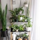 How to use grow lights for houseplants to help them thrive!