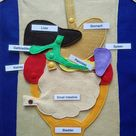 Human organs felt play mat, Montessori anatomy materials, the human body, science play mat
