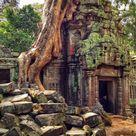Ta Prohm Temple, Angkor, Cambodia. The jungle wants it back.