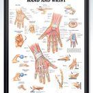 Hand and Wrist Chart 20x26