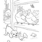 Farm Animal Coloring Pages   Printable Chickens Coloring Page Baby chicks