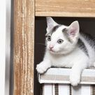 Jigsaw Puzzle. Young male cat, 10 weeks, lying on a box