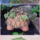 DIY Succulent Turtle Tutorial Video