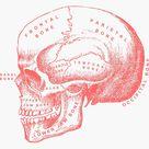 Skull Bones Names - Studying Medicine Sticker by Neli Dimitrova