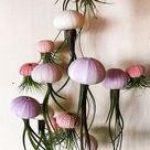 TWELVE Assorted Hanging Jellyfish Air Plants Wedding | Etsy