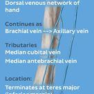 Basilic vein