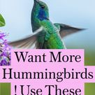 Want More Hummingbirds! Use These 4 Plants