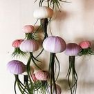 SIX Assorted Hanging Jellyfish Air Plants   Wedding Gift   Birthday Gift   Airplants