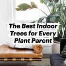 The Best Indoor Trees for Every Plant Parent