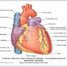 Blood Supply to Heart / CORONARY CIRCULATION
