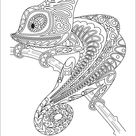 Monochrome chameleon coloring page black over vector image on VectorStock