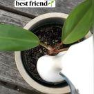 Meet your plant's NEW best friend!