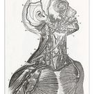 A1 Poster. Cardiovascular System Engraving