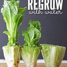 10 Ways to Regrow Food in Water