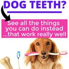 Brushing Dog Teeth Can Be A Pain!... Here Are Some Other Ways To Keep Dog Teeth Clean