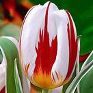 Canada Ca