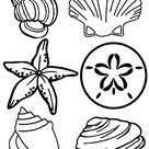 Complete Sea Shells Family Free Coloring Page - Download & Print Online Coloring Pages for Free