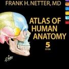 Atlas of Human Anatomy, Netter, Frank Netter, Netter Anatomy