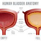 Bladder Habits for a Healthy Bladder