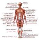 Anatomy! Yus!