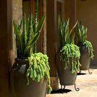 Urn Planters