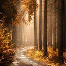 Golden Hues by MarcoHeisler on DeviantArt