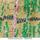 False Colour Electron Microscope Micrograph Showing Stock Photo Edit Now 785623726