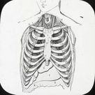 1000 Piece Puzzle. X-Ray - Ribcage and internal organs of the