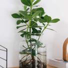 Waterplants: Wie du sie selber machen & pflegen kannst